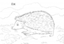 Wild animals coloring pages | Wild Animals Loose in the Library! | Scoop.it