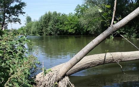 El riu Ter i els seus afluents mantenen una qualitat biològica saludable | #territori | Scoop.it