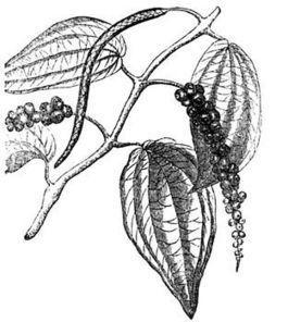 Propiedades medicinales de la pimienta | PIMIENTA (Piper nigrum) | Scoop.it