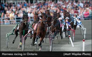 Ontario Breeders Sue OLG | Standardbred Canada | Horse Racing Industry | Scoop.it