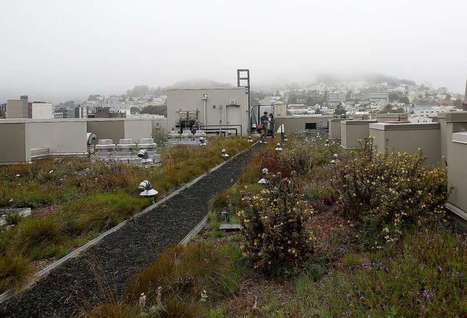 Bill would encourage rooftop gardens on new SF buildings | The EcoPlum Daily | Scoop.it