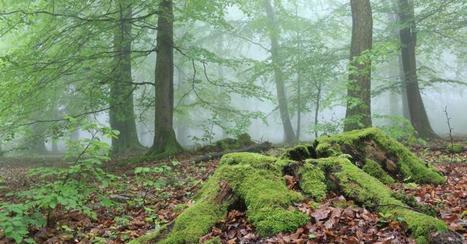 Le Soir | Nassonia, une forêt naturelle au service de tous | L'actualité de l'Université de Liège (ULg) | Scoop.it