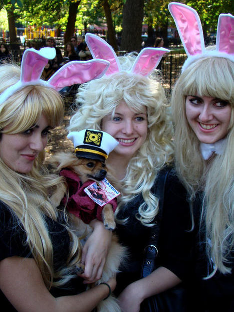 Playboy Bunny Halloween Costumes For Women - Creative Costume Ideas | Boutique Shops News! | Scoop.it