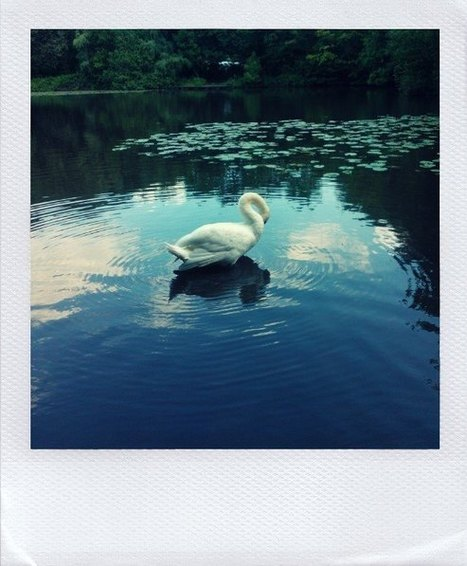 Le Polaroid a le vent en poupe: du visuel pour votre image - Écrire Pour le Web | TIC TIC TIC ... CM | Scoop.it