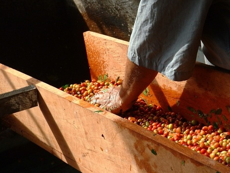 Coffee Origins: Where Flavour Comes From | Wine | Scoop.it