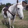 Trail Horse Rider