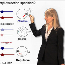Chemical Glycobiology - Carolyn Bertozzi - iBioSeminars (iBiology) | Glycoinformatics | Scoop.it