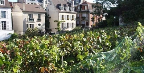 Montmartre fête ses vendanges 2014 | Le vin quotidien | Scoop.it