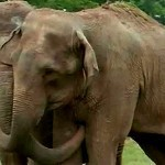 Elephants Reunited After 20 Years | curating your interests | Scoop.it
