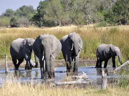 Over 950 poachers arrested in Tanzania over last 2 months | Life on Earth | Scoop.it