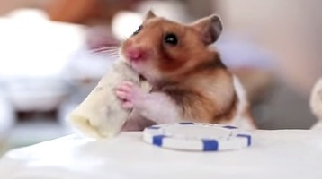 You HAVE to See This Adorable Video of A Tiny Hamster Eating Tiny Burritos! | Adorable | Scoop.it