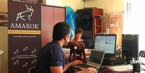 Vidéo : Santé, le stress des patrons de PME   Les risques psychosociaux des patrons   Scoop.it