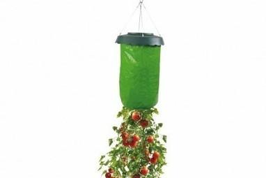 jardin suspendu pour plant tomate potager ag. Black Bedroom Furniture Sets. Home Design Ideas