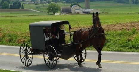 Horse killed in Amish country drive-by shooting, police nab killer | The Atheism News Magazine | Scoop.it