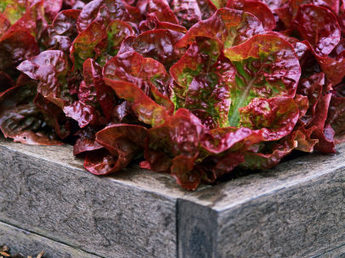 HGTV Gardens – Design Ideas, Expert Tips and Gardening Community : HGTV Gardens | Garden, landscape, plants, flowers | Scoop.it