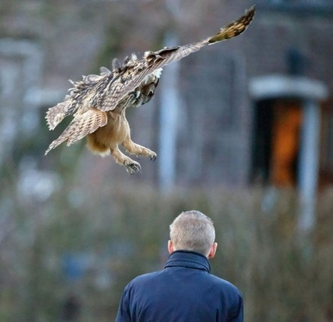 This Famous Dutch Owl Loves to Land on People's Heads | Strange days indeed... | Scoop.it