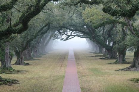 The Best Travel Pins | Oak Alley Plantation: Things to see! | Scoop.it