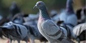 2,000 pigeons with lights | FOTOTECA LEARNENGLISH | Scoop.it