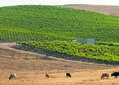 Groups reach agreement on managing Paso Robles groundwater basin | Local News | SanLuisObispo.com | Southern California Wine and Craft Spirits Journal | Scoop.it