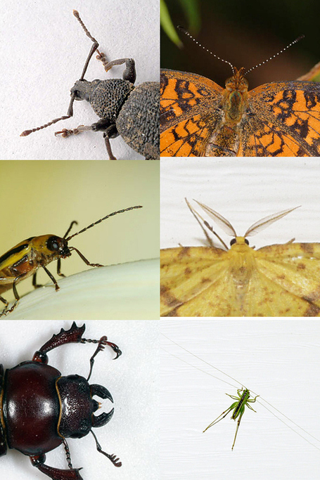 Insect | STEM and education | Scoop.it
