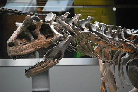 Dinosaurs Inside Out | Paleoanthropology news | Scoop.it