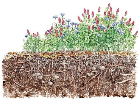 Can Cover Crops Fix Farms Forever? | Environmental Innovation | Scoop.it