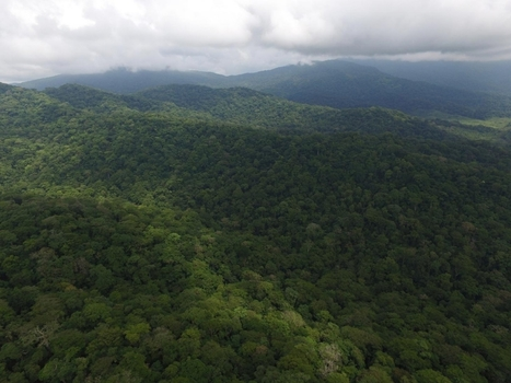 New weapons for Panama tribes in old fight to save forests   Lauri's Environment Scope   Scoop.it