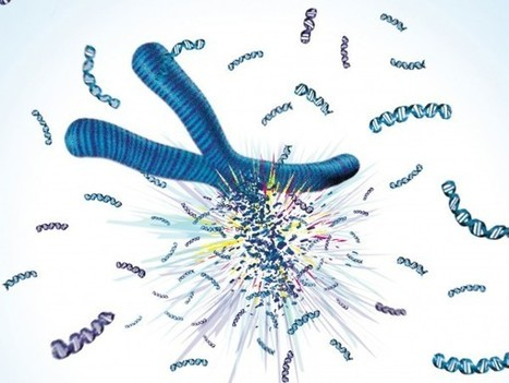 Shattered chromosome cures woman of immune disease - Science Now   Rare diseases   Scoop.it