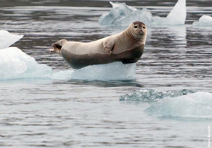 Wildlife in a Warming World: Confronting the Climate Crisis | EcoWatch | Scoop.it