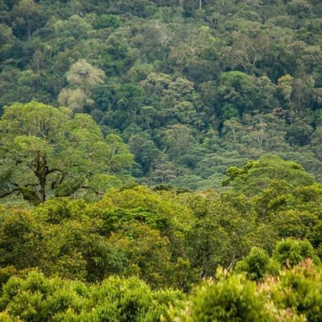 Indonesian pulp and paper company to restore one million hectares of rainforest - ABC Online   Indonesian Language and Culture   Scoop.it