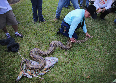 Snake Bodies Not Exactly Piling Up | You Can't Make This Stuff Up | Scoop.it