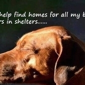 Animal Care Services (ACS) in San Antonio, Texas, ACS Director, Kathy Davis: Stop the shelter from euthanizing animals when there are open kennels! | Animal shelters | Scoop.it