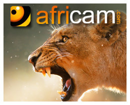 Africam | Nkorho LIVE Channel - A 24/7 Interactive African Wildlife Safari | Africam | My Funny Africa.. Bushwhacker anecdotes | Scoop.it