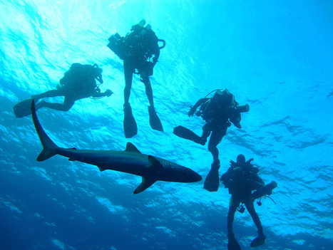 Diving in Shark-Infested Waters -- for Science! - io9 | CLOVER ENTERPRISES ''THE ENTERTAINMENT OF CHOICE'' | Scoop.it