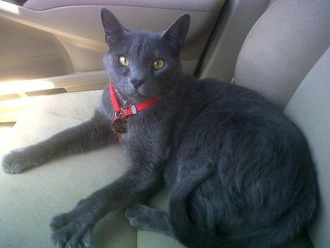 Free cats for Cat fans - Tucson News Now   The Funniest Cats In The World!   Scoop.it