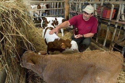L'aromathérapie est dans le pré, pour le bien-être des bêtes et des éleveurs | Elevage | Scoop.it