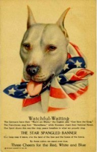 Pit bulls as mascots and war dogs for the American military : FIGHT ... | Dogs and People | Scoop.it