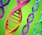 Gene that prevents heart regeneration discovered - NHS Choices | Biology | Scoop.it