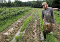 Heavy rains dampening farmers' summer profits | NewsObserver.com | North Carolina Agriculture | Scoop.it