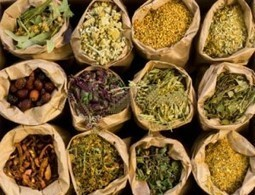 30 Most Popular Herbs for Natural Medicine | Wake Up World | Therapeutes-Magazine.com | Scoop.it