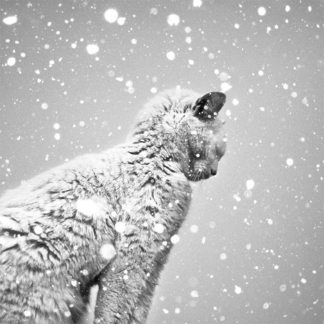 The Black and White Photography of Benoit Courti | Colossal | Photography Lover | Scoop.it