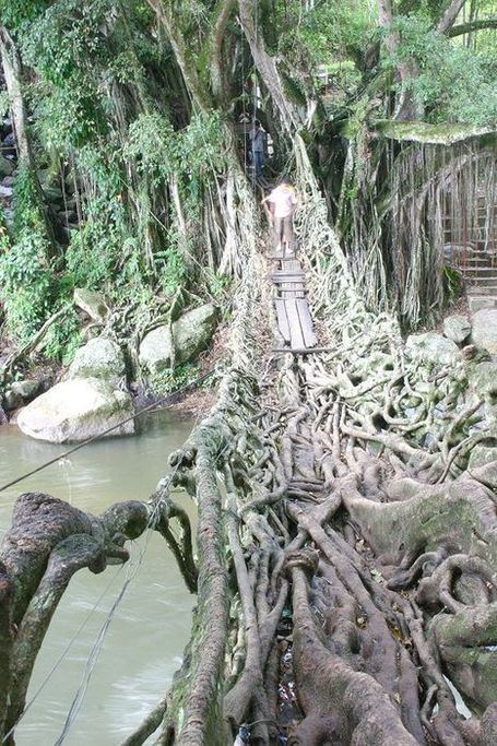 Jembatan Akar – Indonesia's Amazing Tree Root Bridge | Strange days indeed... | Scoop.it