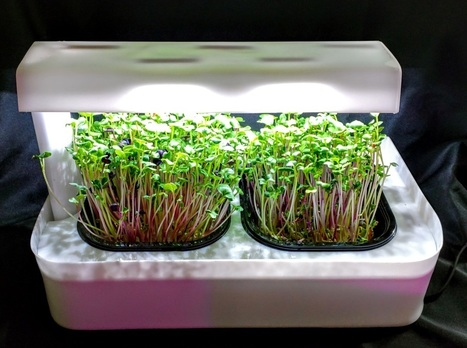Seed to Harvest in 7 Days ... | Vertical Farm - Food Factory | Scoop.it