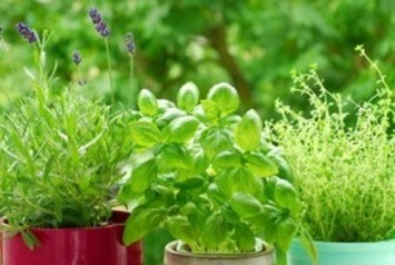 Grow 7 Healing Herbs At Home   Container Gardening   Scoop.it
