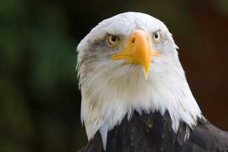 The Wisdom of Eagles: Mindfulness Lessons for Leadership and Life - Huffington Post | Culture of Excellence | Scoop.it
