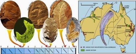 Des fossiles révèlent des relations plantes-insectes au Jurassique   EntomoNews   Scoop.it