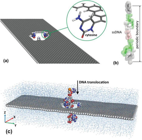 NIST simulates fast, accurate DNA sequencing through graphene nanopore | Research Workshop | Scoop.it