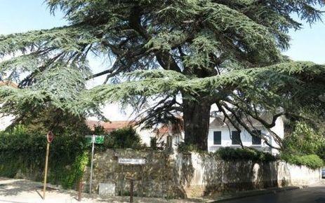L'abattage de l'arbre historique crée la polémique - Le Parisien | Villes | Scoop.it