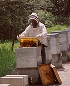 L'évaluation des produits phytosanitaires et du risque pour les abeilles   Confidences Canopéennes   Scoop.it