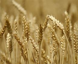 L'agriculture biologique pas clairement gagnante dans la biodiversité microbiologique des sols | Mes passions natures | Scoop.it